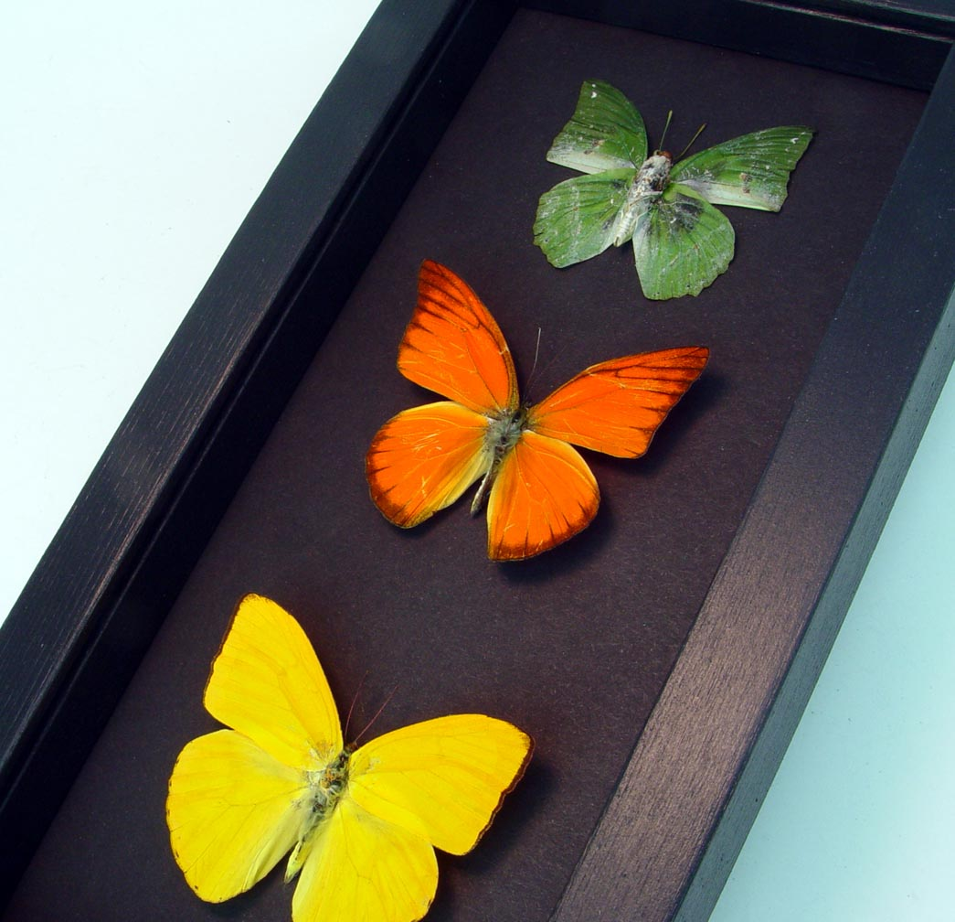 Citrus Collection Lemon Lime Orange Butterflies Moonlight Display ooak