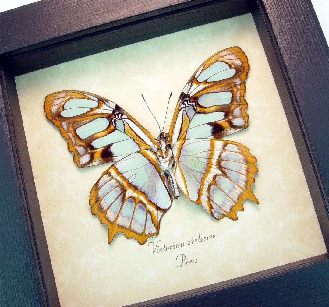 Green Malachite Butterfly Framed Victorina stelenes ooak