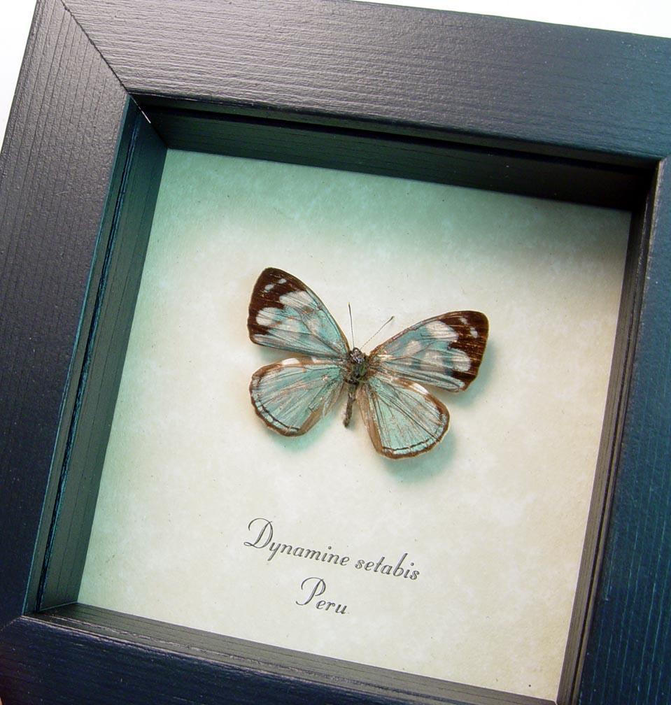Dynamine setabis Sage Green Butterfly ooak