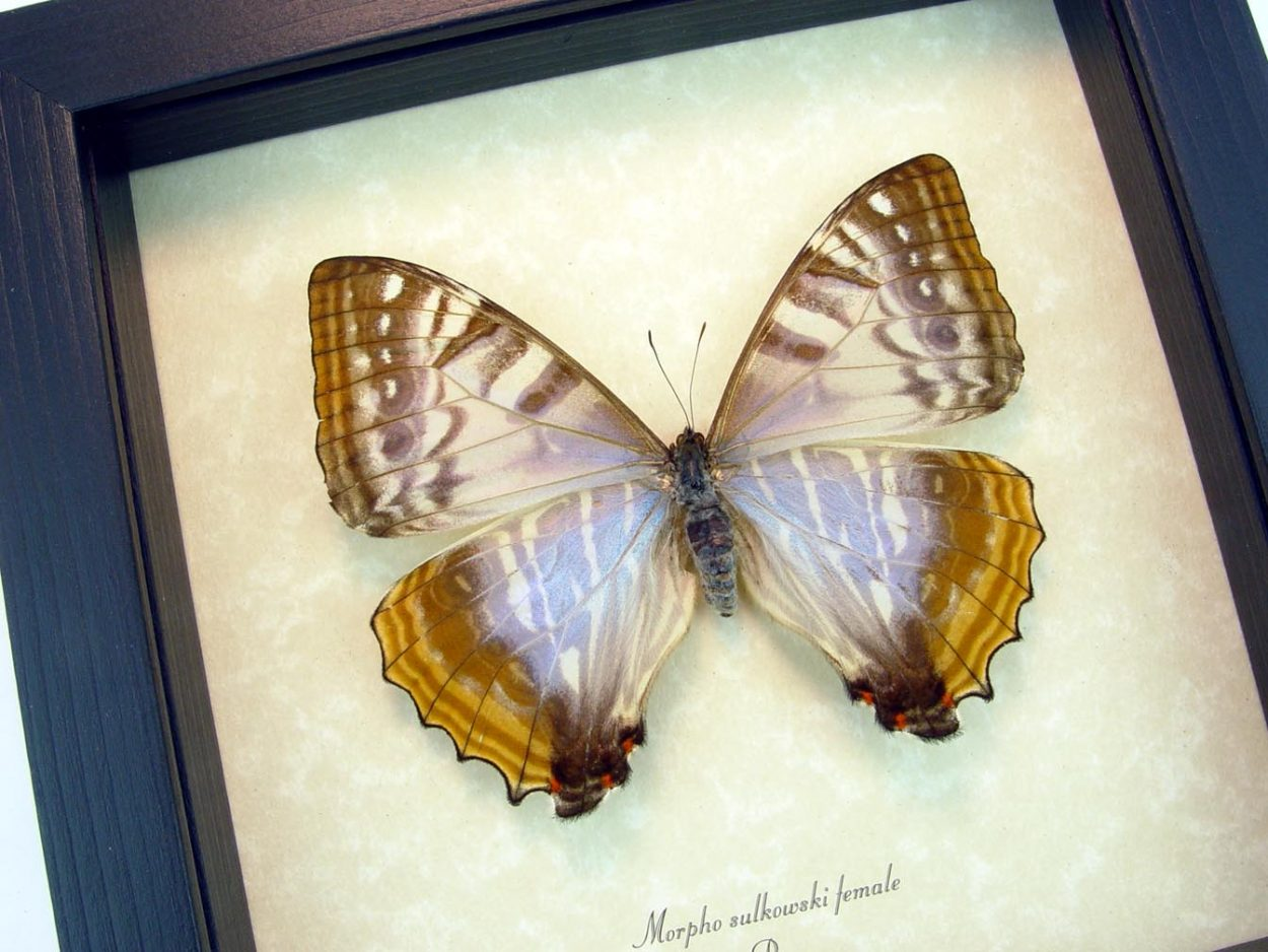 Mother's Day Gift Mother Of Pearl Framed Butterfly