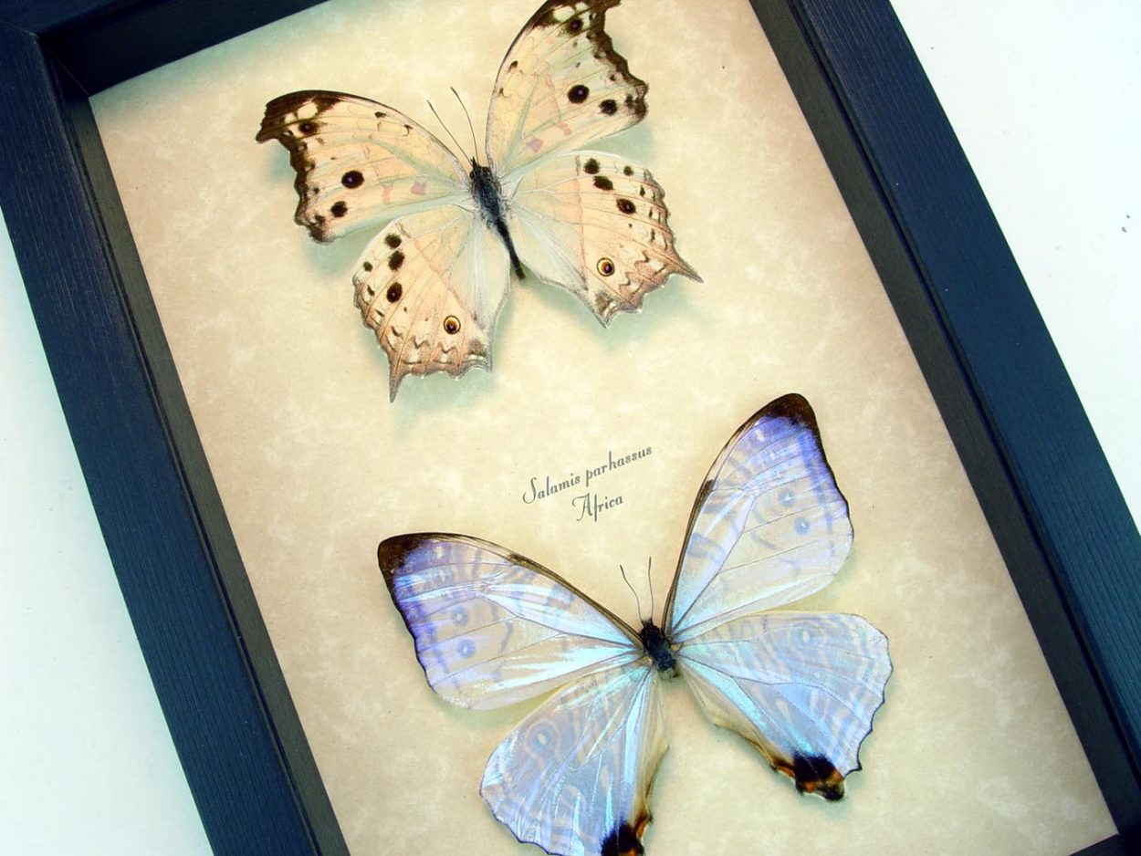 Mother of Pearl Butterflies Framed Butterfly Mother's Day Gift