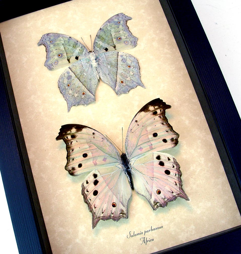 Mother's Day Butterflies Mother Of Pearl Framed Butterflies